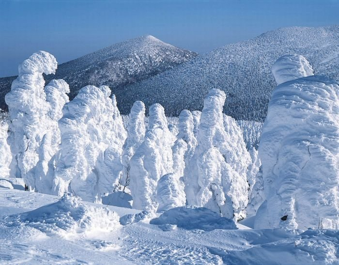 snow monsters, juhyou, frost-covered trees