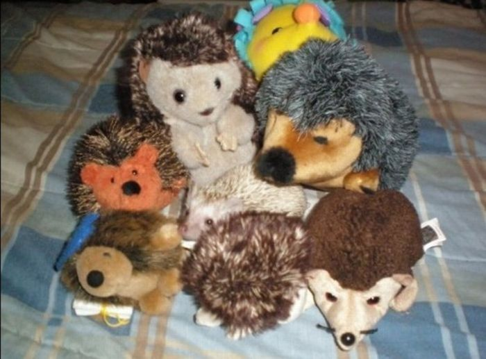 pets with stuffed toys