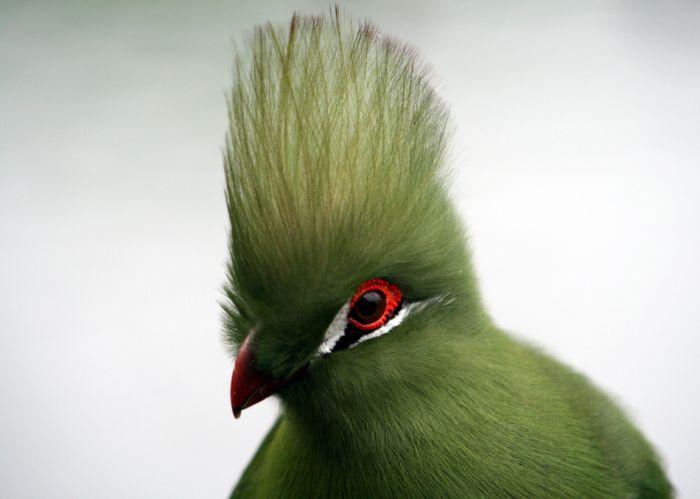 چسب پرنده در شمالی ترین قسمت باغ پرندگان بزرگترین قفس آن جلب توجه میکند که گونه هایی از عقاب ها بر روی درختان تنومند اما بی شاخه...