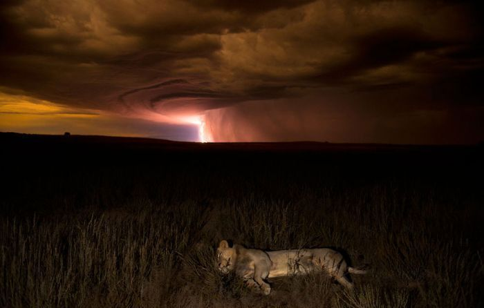 Wildlife Photographer winners 2012