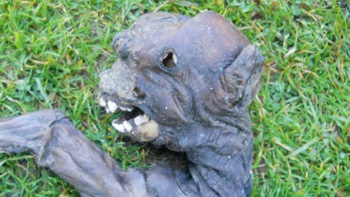 Dead baby baboon discovered in Nature's Valley, Plettenberg Bay, South Africa