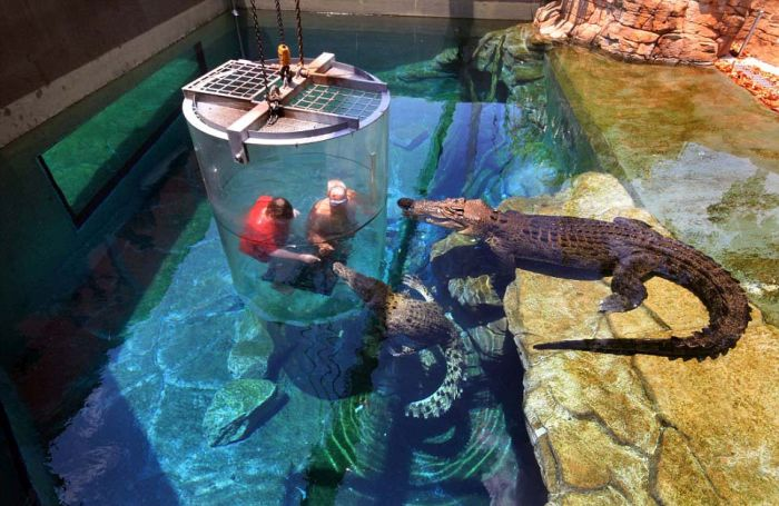 Cage of Death, Crocosaurus Cove Park, Darwin City, Australia