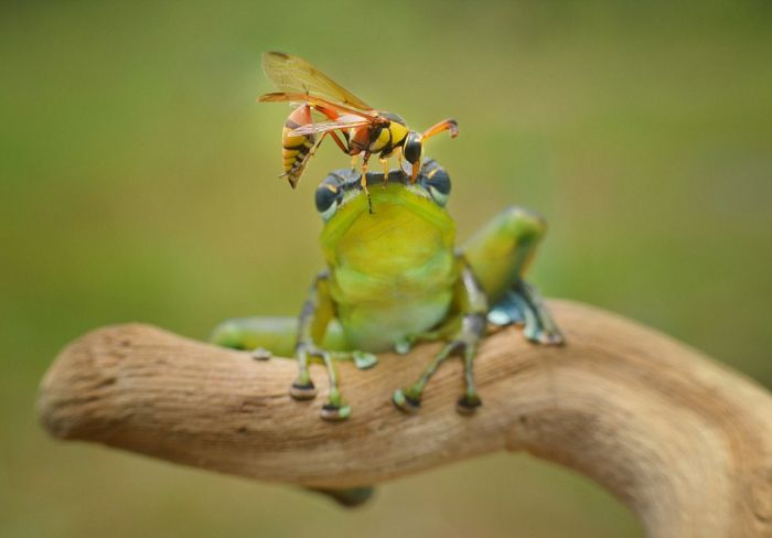 frog and the wasp