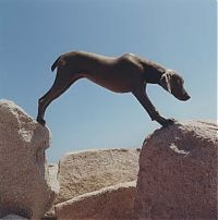 TopRq.com search results: William Wegman photos of dogs