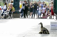 TopRq.com search results: Ducks saved, Spokane, Washington, United States