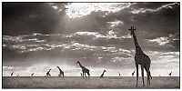 TopRq.com search results: Black and white animal photography by Nick Brandt