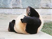 TopRq.com search results: sleeping panda