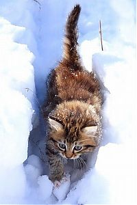 TopRq.com search results: cats in the snow