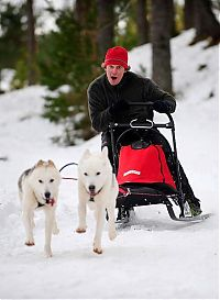 TopRq.com search results: Husky Sled Dog Rally