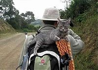TopRq.com search results: guy traveling with a cat