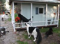 Fauna & Flora: home for homeless cats