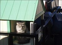 TopRq.com search results: home for homeless cats