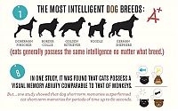 TopRq.com search results: infographics about cats and dogs
