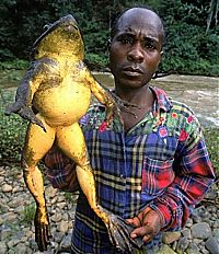 TopRq.com search results: Giant frog, Madagascar