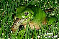 TopRq.com search results: the green trea frog