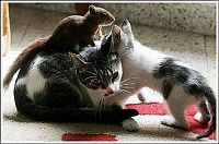 TopRq.com search results: cats play with a squirrel
