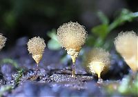 TopRq.com search results: fungi mushroom microorganisms