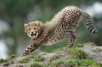 TopRq.com search results: Wildlife photography by Peter Lindel