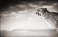 TopRq.com search results: Black and white wildlife photography by Nick Brandt