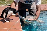 TopRq.com search results: 10 day old orphan dolphin, Montevideo, Uruguay