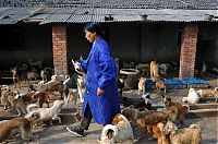 TopRq.com search results: Ha Wenjin, animal shelter for 1,500 dogs and 200 cats