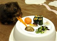TopRq.com search results: sushi for my little hamster