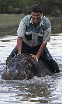TopRq.com search results: Marius Els and his pet hippo Humphrey, South Africa