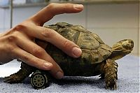 TopRq.com search results: turtle with a wheelchair