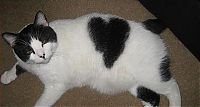 TopRq.com search results: cats with fur heart