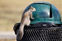 TopRq.com search results: squirrel eating from park trash can