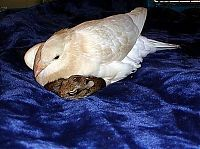TopRq.com search results: turtle dove takes care of baby rabbits