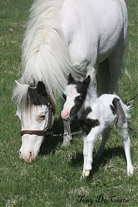 TopRq.com search results: einstein, the world's smallest miniature horse