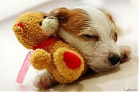 TopRq.com search results: pets with stuffed toys