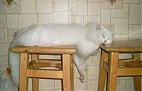 TopRq.com search results: planking cat