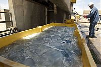 TopRq.com search results: Jellyfish clog water supply, coal-fired power station Orot Rabin, Hadera, Israel