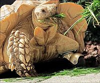 TopRq.com search results: tortoise with a prosthesis