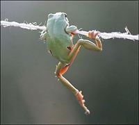 TopRq.com search results: frog on a string