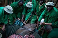 TopRq.com search results: Baby elephant orphanage institution, Kenya