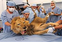 TopRq.com search results: tiger and lion dentistry