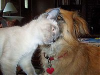 TopRq.com search results: cats and dogs whispering