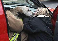 TopRq.com search results: Firefighters resuscitate a dog by mouth-to-snout insufflation, Wasau, Wisconsin, United States