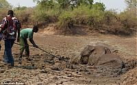 TopRq.com search results: Rescuing a baby elephant and its mother, Kapani Lagoon, Zambia