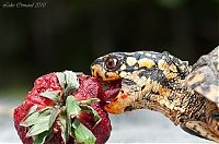 TopRq.com search results: eating turtle
