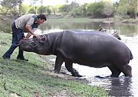 TopRq.com search results: Marius Els killed by his pet hippo Humphrey, South Africa