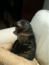 TopRq.com search results: baby seal visited a house