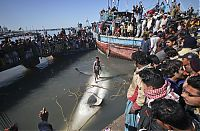 TopRq.com search results: Giant whale shark catch, Pakistan
