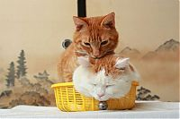 TopRq.com search results: two kitties in a basket