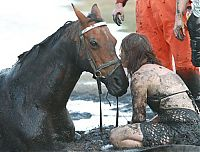 TopRq.com search results: Rescuing a horse stuck in mud, Avalon Beach, Corio Bay, Victoria, Australia