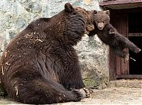 TopRq.com search results: mother bear angry at her cub