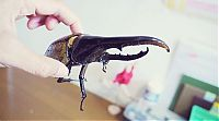 TopRq.com search results: the life of a hercules beetle